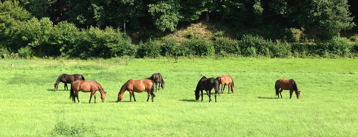 Schloss Ahrenthal Pferde